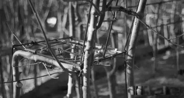 在小树的生长过程中不断改变其生长方向